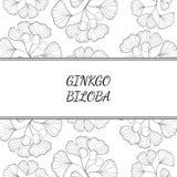 Ginkgo Biloba, background 3 Stock Image