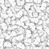 Ginkgo biloba Baum verlässt als weißes Beschaffenheitskonzept Stockbild