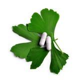 Ginkgo Biloba-Blätter mit Kapseln Stockfotografie