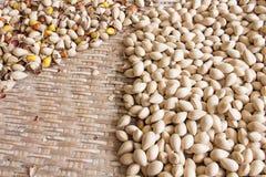 Ginkgo biloba dried seeds Stock Photos