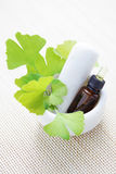 Ginkgo biloba essential oil Royalty Free Stock Image