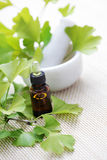 Ginkgo biloba essential oil Royalty Free Stock Photos