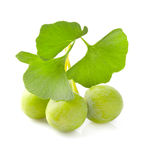 Ginkgo biloba fruit Stock Photos