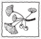 Ginkgo biloba hand-drawn branch with leaves Stock Photo