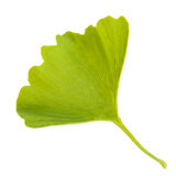 Ginkgo biloba leaf isolated on white background Stock Images