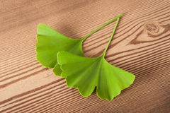 Ginkgo Stock Images