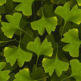 Ginkgo biloba nahtloses Muster Grünes Blattheilpflanze backg Lizenzfreie Stockfotos