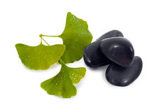 Ginkgo biloba tree leaves and rock. Stock Photography
