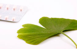 Ginkgo biloba on white background Stock Photography
