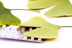 Ginkgo biloba on white background Stock Photos