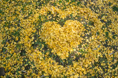 Ginkgo biloba3 --- With a heart-shaped ring Royalty Free Stock Photography
