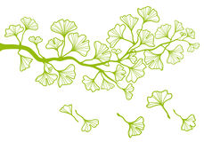 Ginkgo branch with leaves, vector Royalty Free Stock Photo