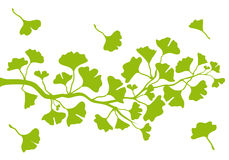 Ginkgo branch with leaves, vector. Ginkgo tree branch with green leaves, vector background stock illustration