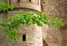 Ginkgo branch and old medieval castle Stock Images