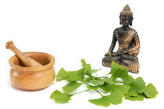 Ginkgo with buddha Stock Photography