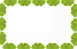 Ginkgo frame. Ginkgo leaf as frame with copy space, white Background Royalty Free Stock Photos