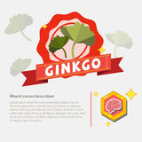 Ginkgo herb -  Royalty Free Stock Photos