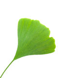 Ginkgo leaf Royalty Free Stock Image
