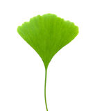 Ginkgo leaf Stock Images