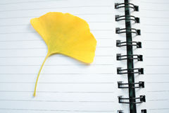 Ginkgo leaf Royalty Free Stock Photography