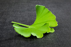 Ginkgo leaf on black. Stock Photography