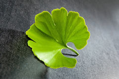 Ginkgo leaf. Royalty Free Stock Image