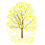 Ginkgo leaves. Ginkgo tree has beautiful yellow fall foliage Royalty Free Illustration