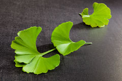 Ginkgo. Royalty Free Stock Photography