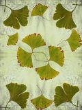 Ginkgo leaves - decorative composition on watercolor background. royalty free stock image