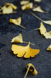 The ginkgo leaves on the ground Royalty Free Stock Photography