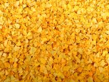 Ginkgo leaves on the ground in autumn Royalty Free Stock Image