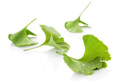 Ginkgo leaves. Ginkgo leaves with water droplets on white background with reflection. Alternative medicine, nutritional supplement Royalty Free Stock Photos