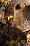 Ginkgo liść Zdjęcia Stock