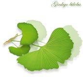 Ginkgo liście,  ilustracja wektor