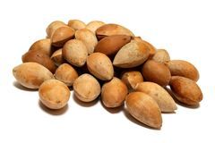 Ginkgo Nuts. Or seeds - a delicacy and important ingredient in Chinese dishes Stock Photography