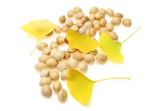 Ginkgo Nuts and leaf Stock Images