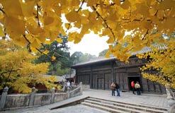 Ginkgo omringde tempel royalty-vrije stock fotografie