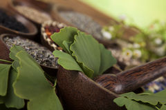 Ginkgo, árbol de maidenhair, remedio natural Imagen de archivo