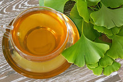 Ginkgo tea with fresh leaves Royalty Free Stock Photos