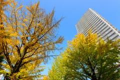 Ginkgo tree-lined at Hikarigaoka park in Tokyo Stock Image