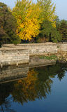 A Ginkgo Tree by Riverside Stock Photography