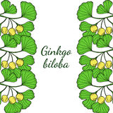 Ginkgo vertical border Royalty Free Stock Photo