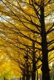 Ginkgo von Bäumen gesäumt an Hikarigaoka-Park in Tokyo Stockbild