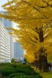 Ginkgo von Bäumen gesäumt an Hikarigaoka-Park in Tokyo Stockfoto