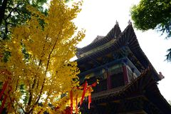 Ginkgobiloba en tempels Royalty-vrije Stock Foto