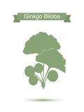 Ginkgobiloba stileert bladeren Silhouet van ginkgotakje royalty-vrije illustratie