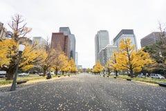 Ginkgoboom in openbare die parkdraai geel in de herfst in het station van Tokyo wordt genomen royalty-vrije stock afbeeldingen