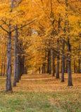 Ginkgobosje Virginia State Arboretum Royalty-vrije Stock Foto's