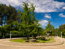 Ginkgos biloba in Compostela park.  Royalty Free Stock Photo