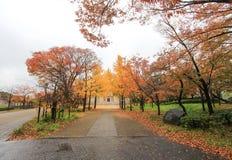 Ginkgoträd på Osaka Castle Park, Japan Royaltyfri Fotografi